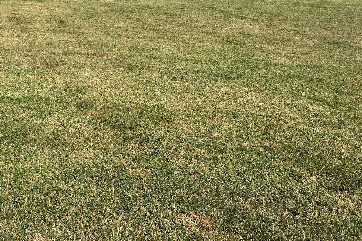 caring for your turf in the heat